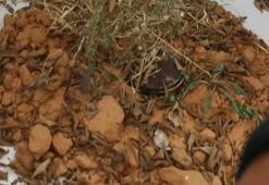 Libya ordusu Hafter milislerinin sivil yerleşimlere tuzakladığı mayınları dünyaya gösterdi