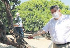 'Sakız Adası'nın tekeli yıkılacak'