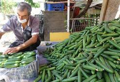 Salatalık fiyatları tarlada düşüşe geçti