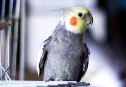 Papağan Türleri Ve İsimleri Nelerdir Papağanların Çeşitleri İle Özellikleri