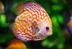 Balık Türleri Ve İsimleri Nelerdir Balıkların Çeşitleri İle Özellikleri