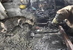 Esenyurtta konteyner yangını Kedi yavrularını bulana kadar mücadele etti