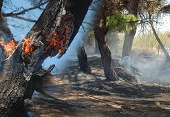 Son dakika... 12.30da Saros'da başlayan yangın kontrol altına alındı