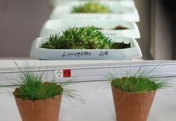 Antarktikadaki bitkilerin yakın zamanda yaşamaya başladığı belirlendi