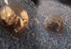 Muğla'da köpeğin getirdiği insan kafatası polisi alarma geçirdi