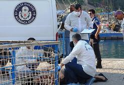 Balıkçılar caretta sandı erkek cesedi çıktı