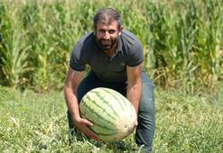 Dünyanın en meşhur karpuzunun yetiştiği Diyarbakırda hasat zamanı