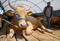 Kurban etiyle ilgili korkutan koronavirüs açıklaması: Bulaşabilir