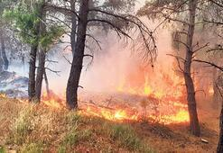 1 yılda 11 bin 332 hektar ormanlık alan kül oldu