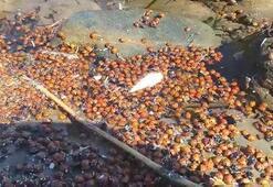 Çanakkalede toplu uğur böceği ölümleri korkuttu