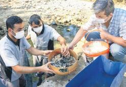 Mahsur kalan balık yavruları kurtarıldı