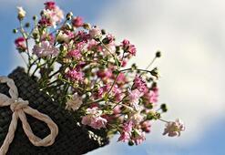 Karanfil Çiçeği: Anlamı, Özellikleri Ve Faydaları Nelerdir Bakımı Nasıl Yapılır