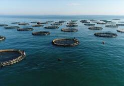 Su ürünleri ihracatı yılın ilk yarısında 459 milyon dolar kazandırdı