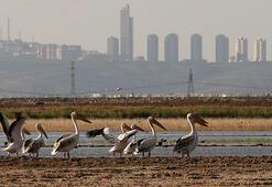 Dikilitaş Göleti kuşlara ev sahipliği yapıyor