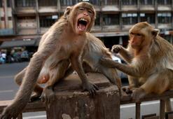 Maymun Türleri Nelerdir Küçük & Büyük Maymun Çeşitleri Ve Özellikleri