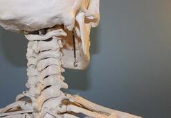 Vücudumuzdaki Sistemler Nelerdir İnsan Vücudunda Bulunan Sistemler Ve Sağlığı