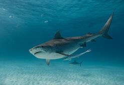 Köpek Balığı Türleri Hangileridir İsimleri Ve Özellikleri Nelerdir