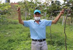 Hibe alarak bahçesine dikti, 50 ton rekolte hedefliyor