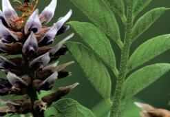 M Harfi İle Başlayan Bitki, Çiçek, Meyve İsimleri Nelerdir Baş Harfi M Olan Bitkiler