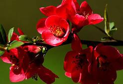 N Harfi İle Başlayan Bitki, Çiçek, Meyve İsimleri Nelerdir Baş Harfi N Olan Bitkiler