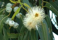 O Harfi İle Başlayan Bitki, Çiçek, Meyve İsimleri Nelerdir Baş Harfi O Olan Bitkiler