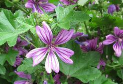 E Harfi İle Başlayan Bitki, Çiçek, Meyve İsimleri Nelerdir Baş Harfi E Olan Bitkiler