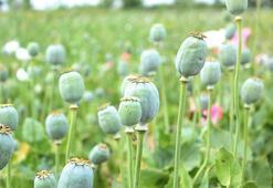 H Harfi İle Başlayan Bitki, Çiçek, Meyve İsimleri Nelerdir Baş Harfi H Olan Bitkiler