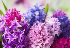 S Harfi İle Başlayan Bitki, Çiçek, Meyve İsimleri Nelerdir Baş Harfi S Olan Bitkiler