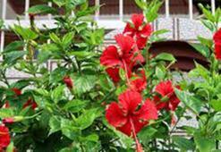 J Harfi İle Başlayan Bitki, Çiçek, Meyve İsimleri Nelerdir Baş Harfi J Olan Bitkiler