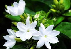 Y Harfi İle Başlayan Bitki, Çiçek, Meyve İsimleri Nelerdir Baş Harfi Y Olan Bitkiler