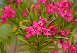 Z Harfi İle Başlayan Bitki, Çiçek, Meyve İsimleri Nelerdir Baş Harfi Z Olan Bitkiler
