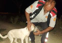 Başı bidona sıkışan köpeği itfaiye kurtardı