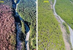 Tırtıl istilasına uğrayan ormanlar eski görünümüne kavuştu