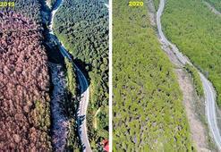 Tırtıl istilasından temizlenen ormanda dikkat çekici değişim