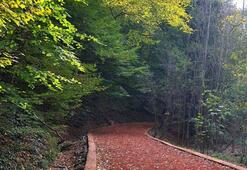 Belgrad Ormanları Nerede Belgrad Ormanına Nasıl Gidilir