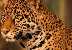 J Harfi İle Başlayan Hayvan İsimleri Nelerdir Baş Harfi J Olan Hayvanlar