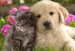 K Harfi İle Başlayan Hayvan İsimleri Nelerdir Baş Harfi K Olan Hayvanlar