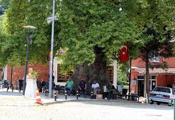 1200 yıllık anıt çınar ağacının altında serinliyorlar