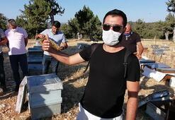 Arıları sinek ilacıyla öldürülüp balları çaldılar
