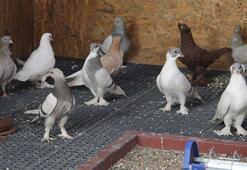 Diyarbakırda 5 yıldızlı kuş oteli açıldı