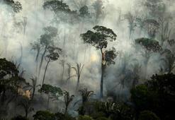 En büyük tropikal sulak alan bilerek yakılıyor