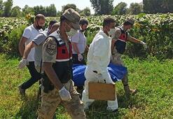 Kahramanmaraşta ayçiçeği tarlasında ölü bulundu