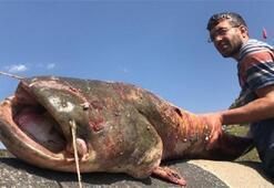 Karsta iki metre boyunda dev yayın balığı yakalandı