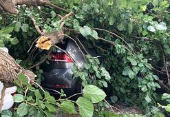 Şişli'de dehşet anları Çürüyen ağaç araçların üzerine devrildi