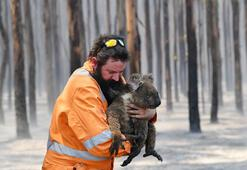 Avustralyadaki yangınlarda 3 milyar hayvan öldü ya da yerinden oldu