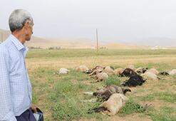 Yüksekovada yıldırımlar can aldı 1 kişi öldü, 19 koyun telef oldu