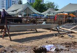 Adanada hayvan pazarında yer kavgası: 2 ağır yaralı