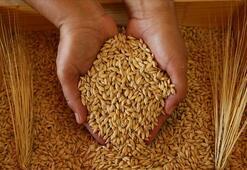 Tarım Krediden rekor arpa alımı