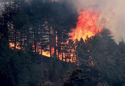 12 ilde 19 orman yangını