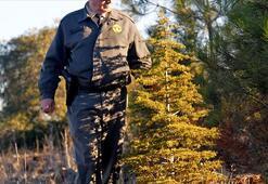 Orman Genel Müdürlüğü 700 işçi alımı | Başvuru şartları belli oldu mu, alım hangi meslek gruplarından olacak